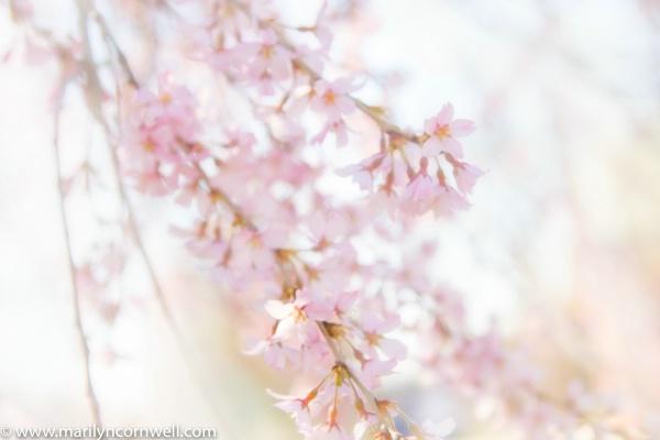 Spring Arrives