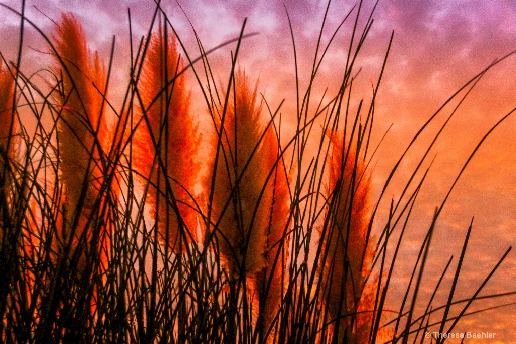 """Through the Pampas Grass """"Feather Dusters&quo"""