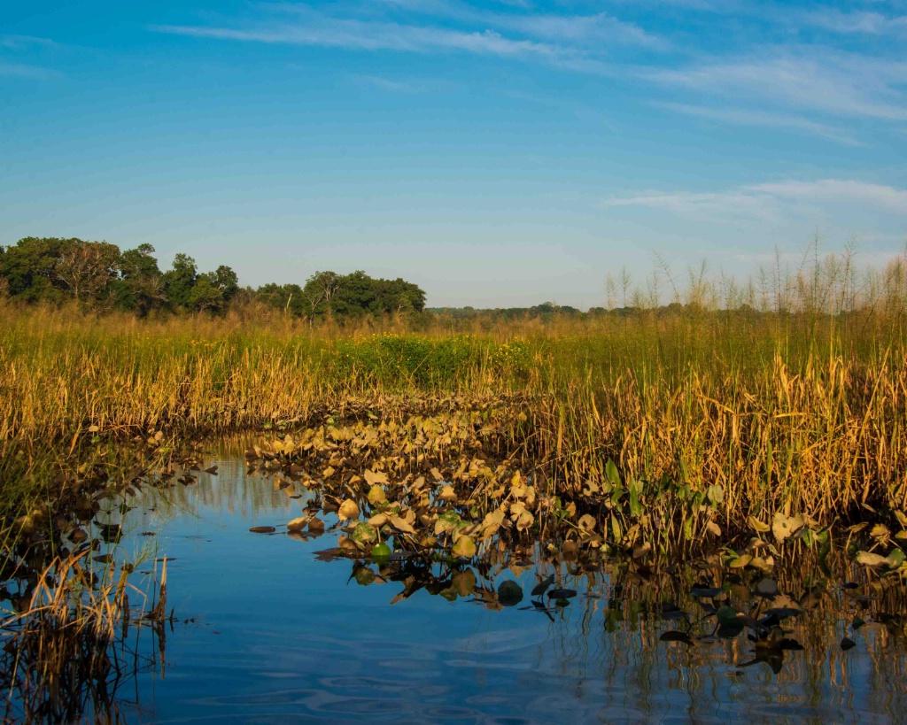 Pax River Wetlands