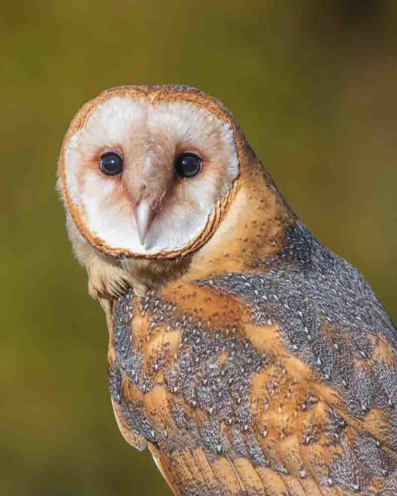 Hello Owl!