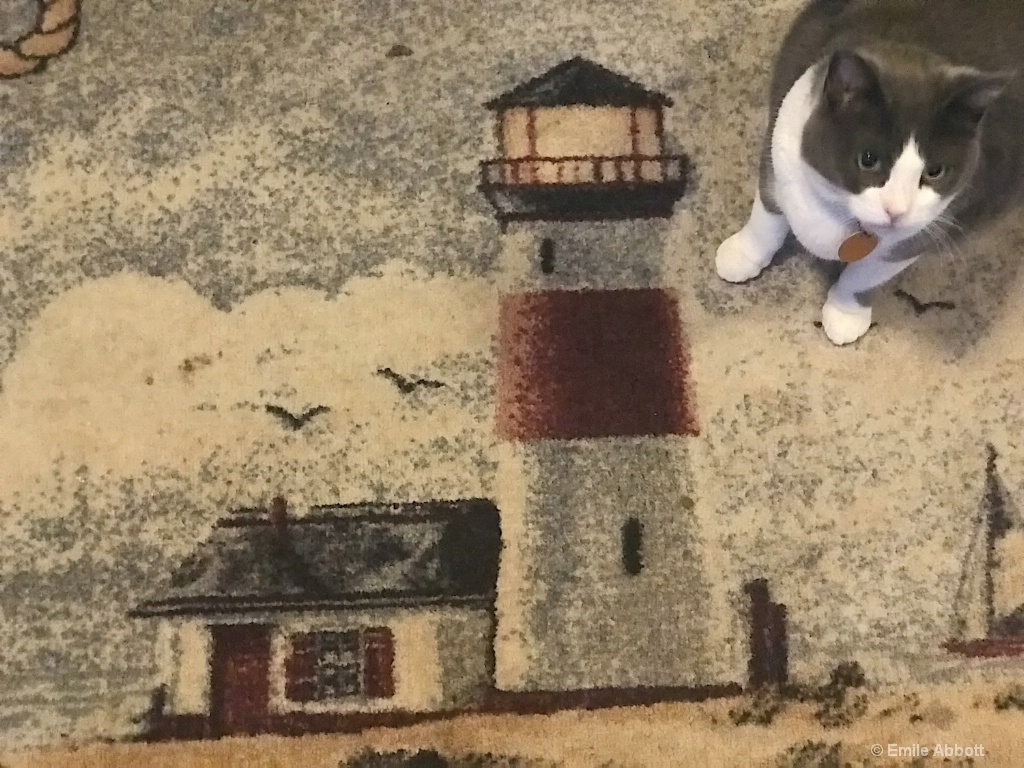 Lighthouse, Texture and Lady Gray