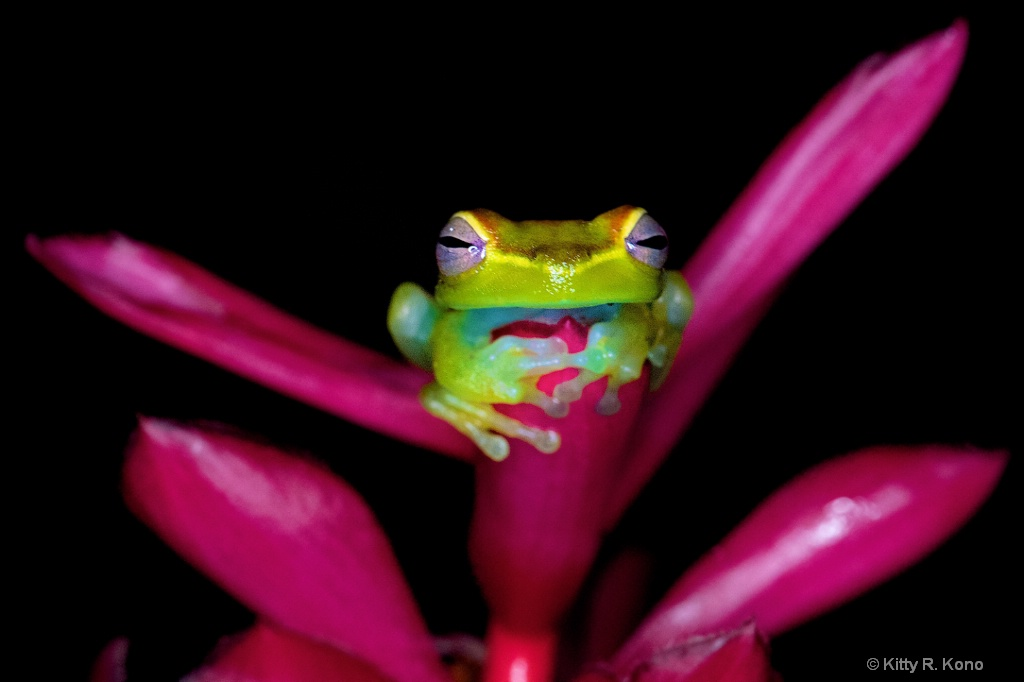 Little Green Frog in the Rain Forest