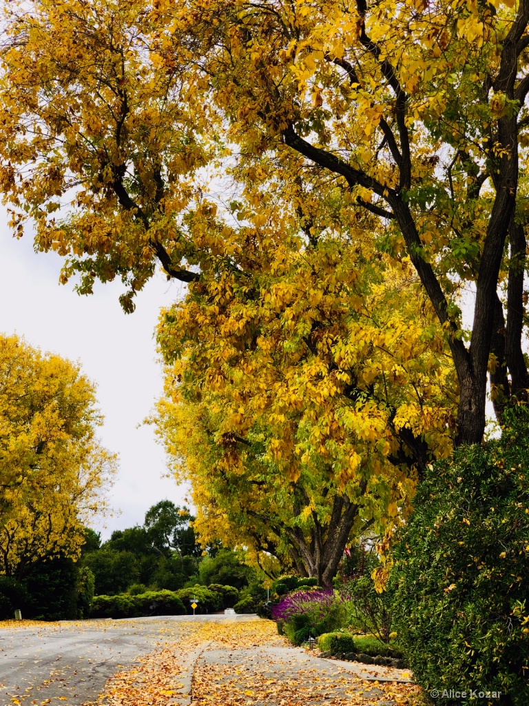It's raining yellow leaves!