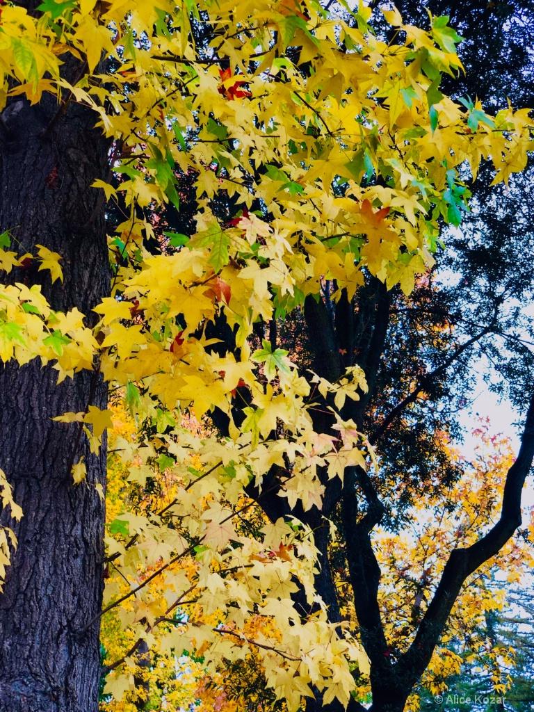 Golden Autumn Splendor