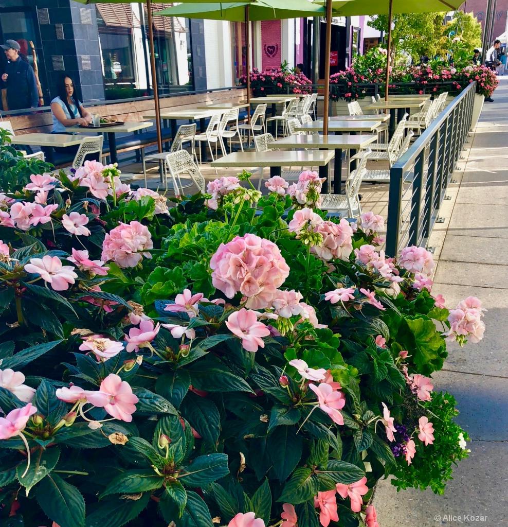 Floral Surround