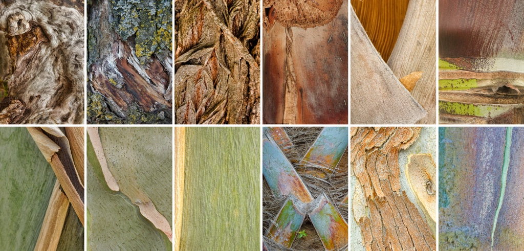 The Bark Collection