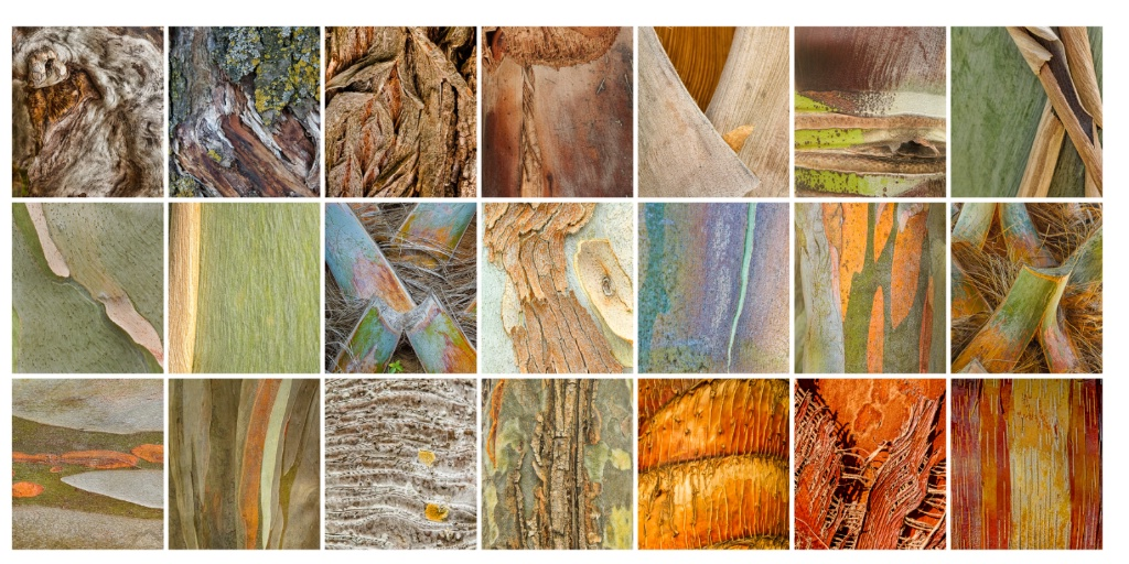 Bark Collection
