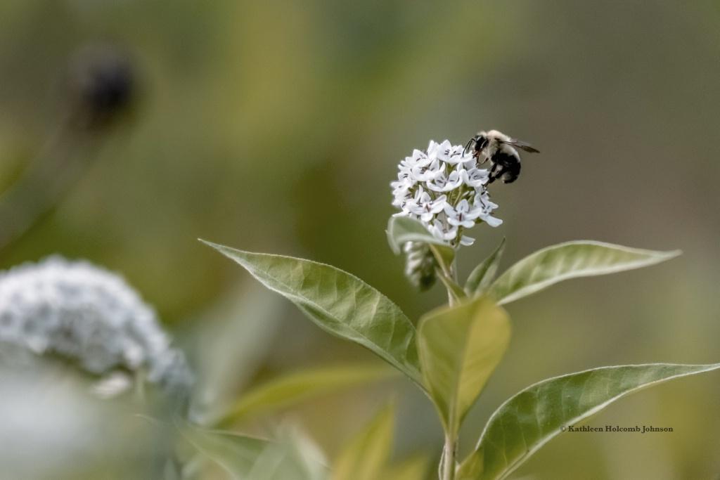 Bee Pollenating!