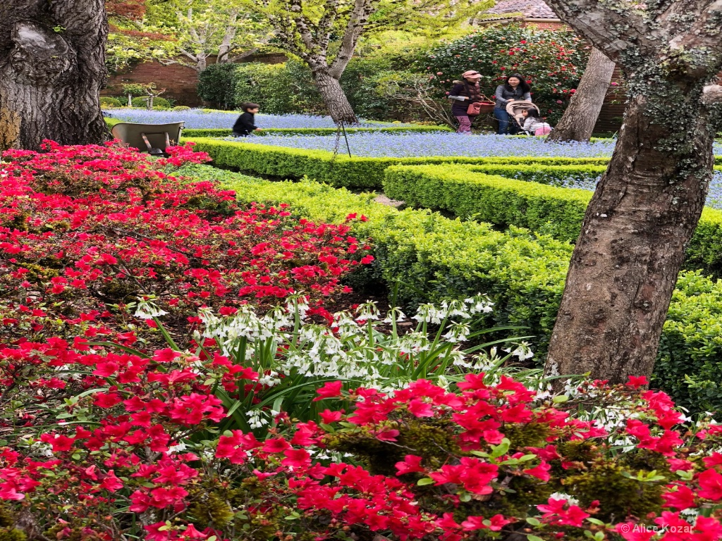 Strolling among the begonias and forget-me-nots