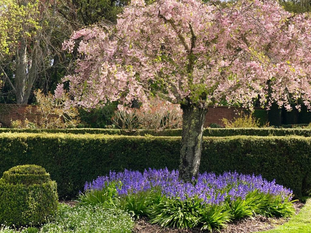 Pink and Lavender Swirls