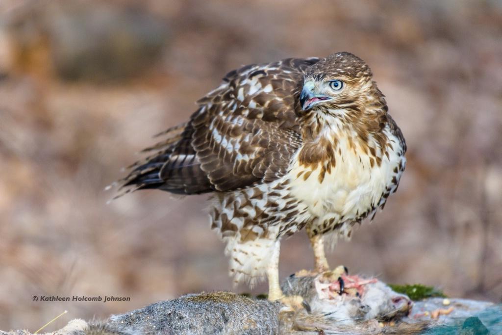 Snarky Hawk!