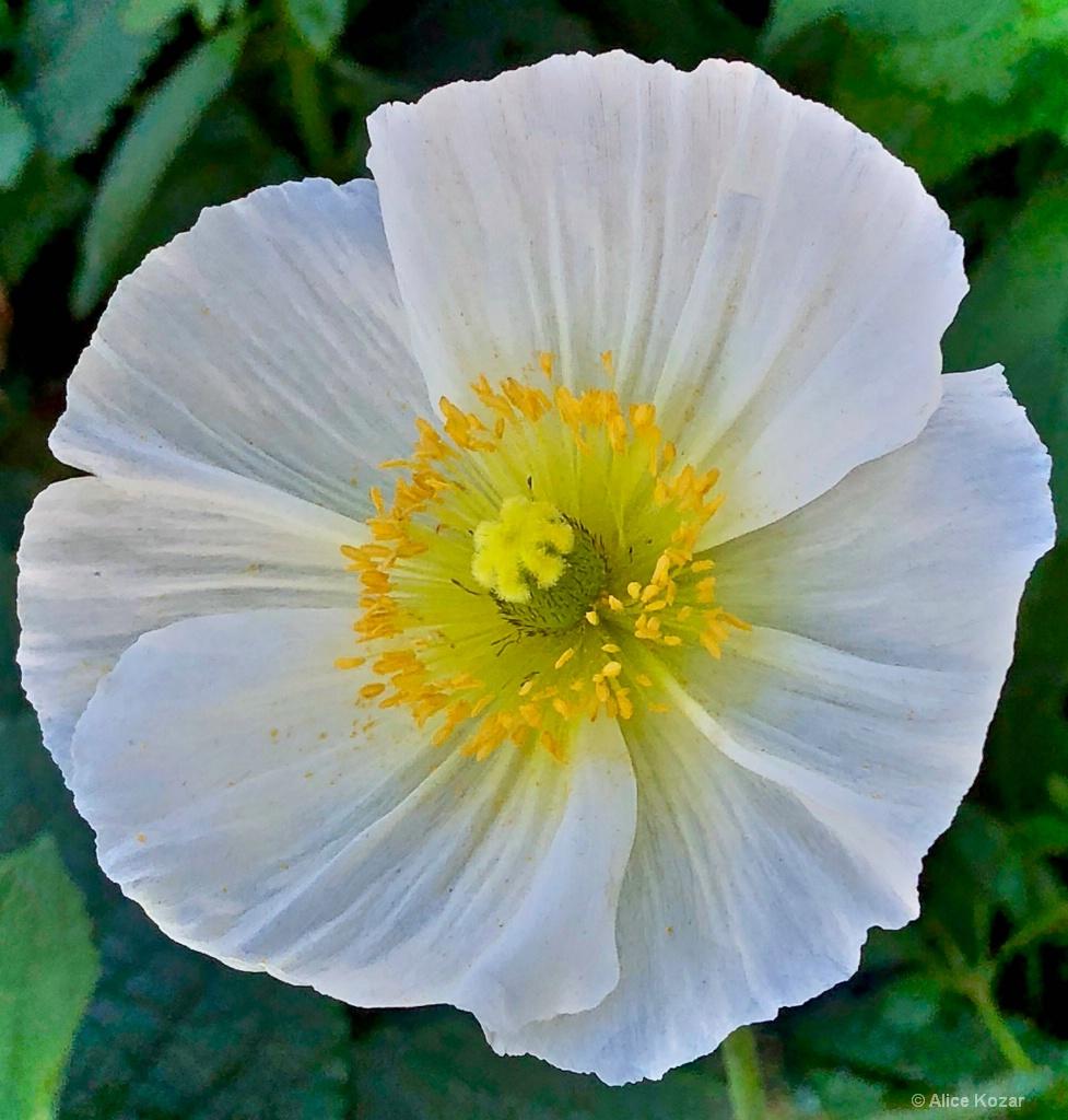 Full Bloom...calling all pollinators!