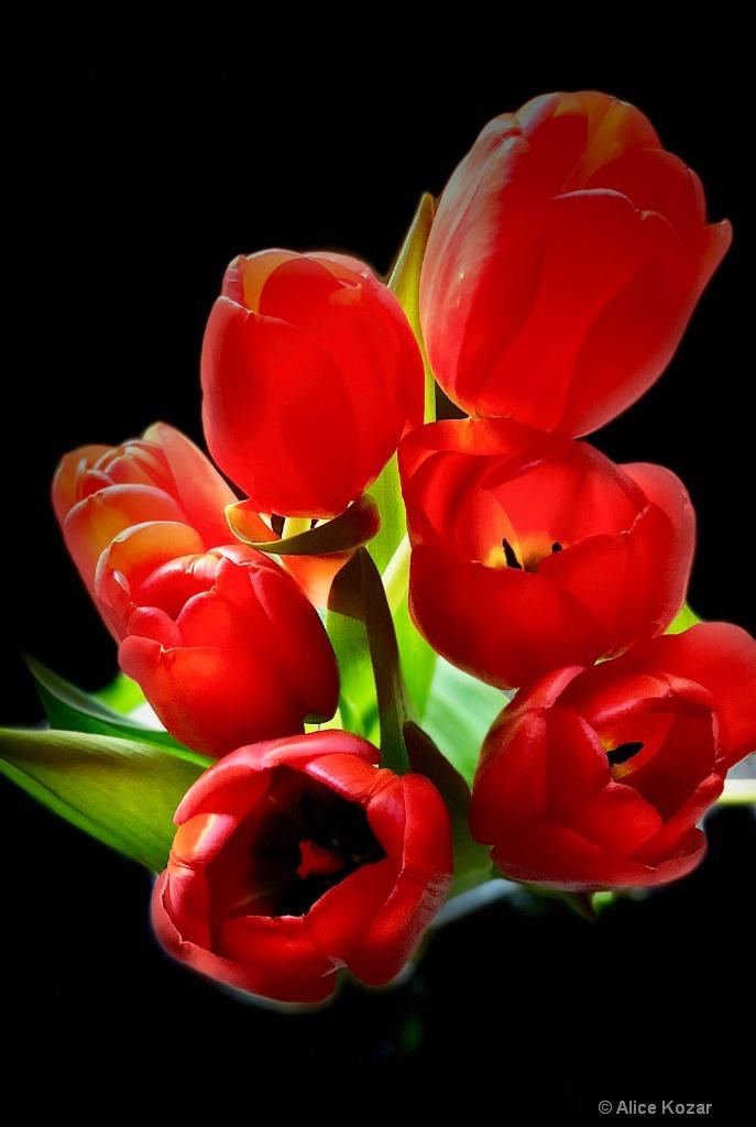 "Tulips ""stage light"""