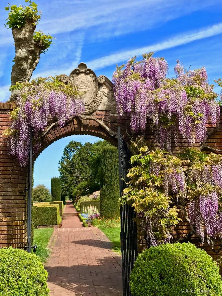 Graceful Lilacs