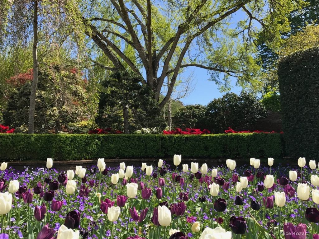 Tulips and Beyond