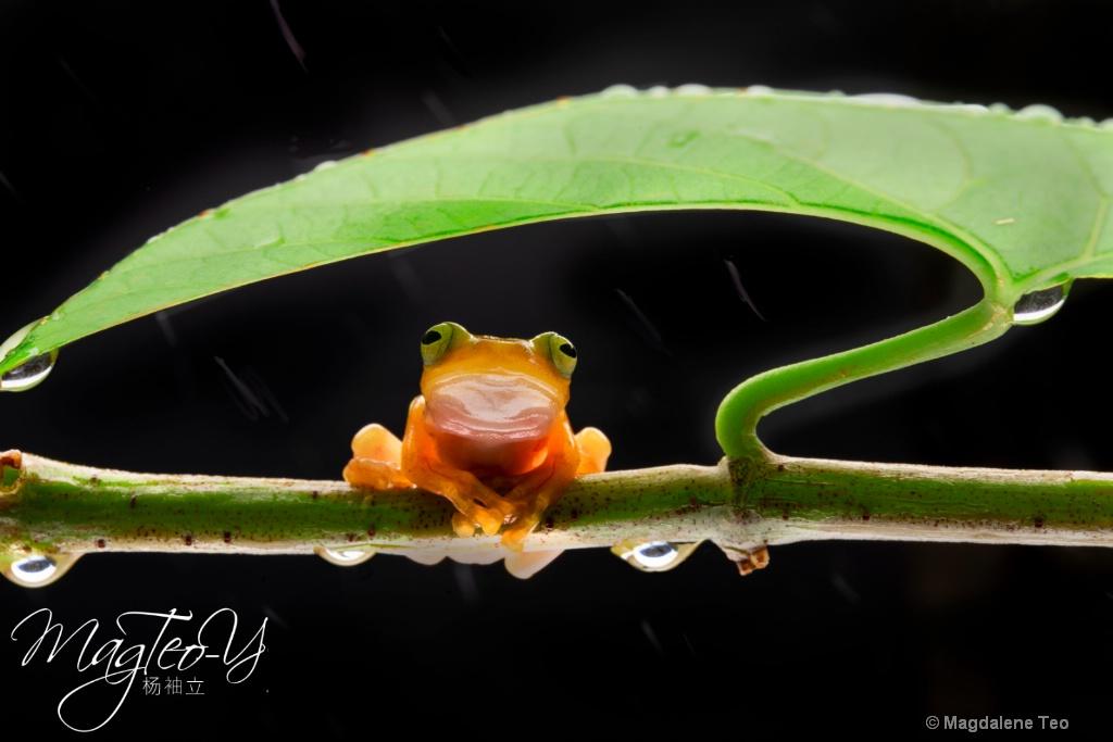 Frog taking Shelter