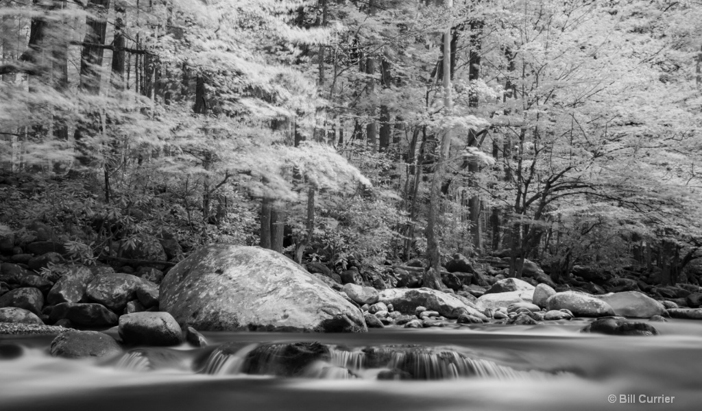 Little Pigeon River Rapids and Trees