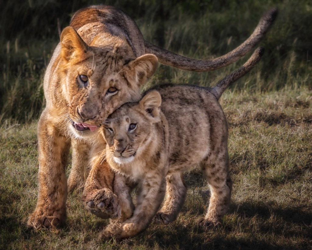 Mother's Protection  7256
