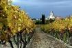 Vineyard in Prove...