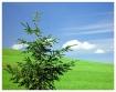 ~Simple Tree~