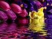 Bouquet  Meltaway