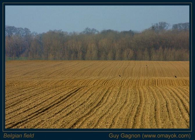 Belgian field