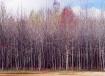Tree Line(s)
