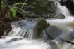 Sylvestri Creek F...