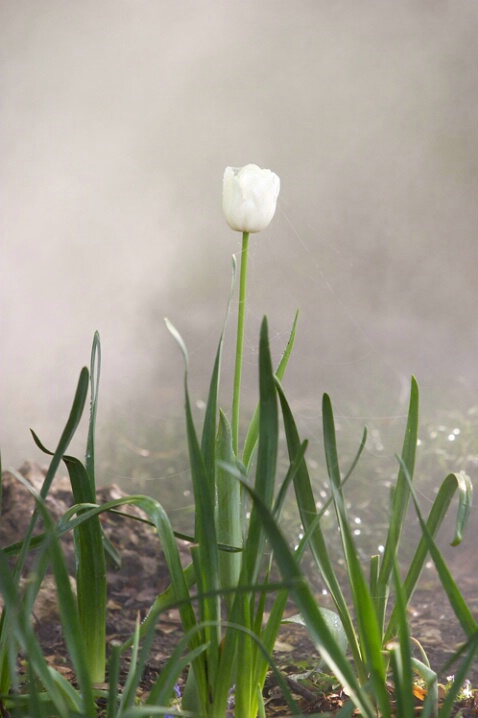 Emerging From Adversity - ID: 104440 © Greg Harp