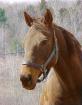 Horse at Autumn C...