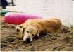 Dog Days Of Summe...