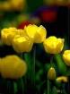 """Flowers: """"Har..."""