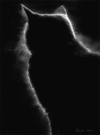 Cat Halo