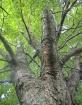 Squirrels Eye Vie...