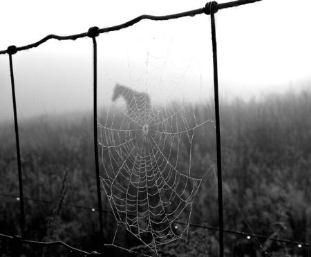 Misty Morning Web