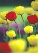 "Flowers: ""Ser..."
