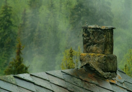 Bird on the chimney