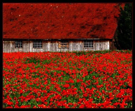 The Poppy House