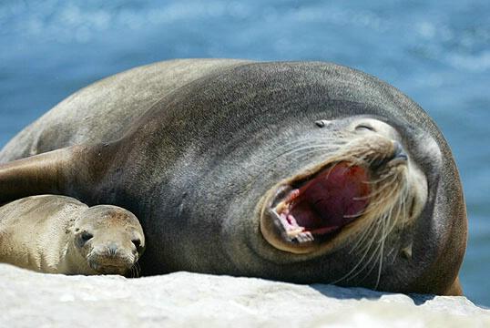 A fearful yawn