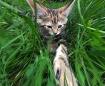 Photoshop Kitten
