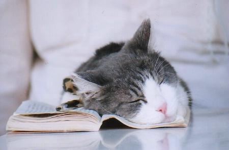 Having a nap