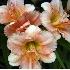 © GARY  L. ROHRBAUGH PhotoID# 143832: Pink Lily