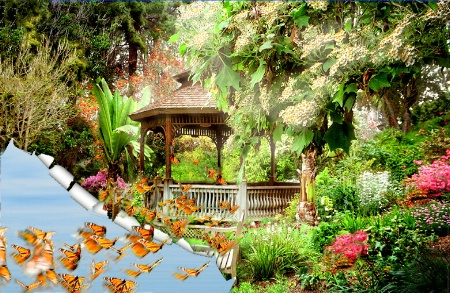 a butterfly land...