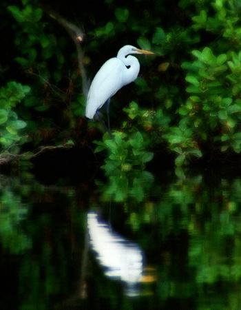 Egret at Lakeside