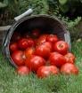 Tomato Overflow