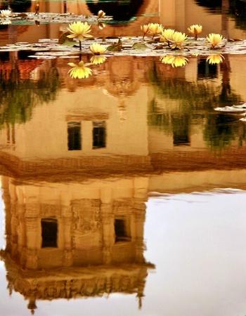 a lily pond...