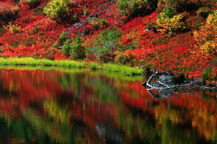Fire Red Reflection