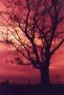 Sunset Mirage.......