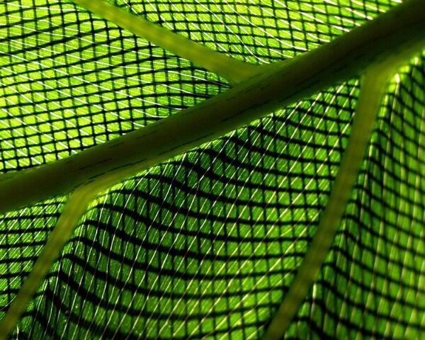 Screened Leaf