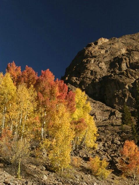 Fall Color Splash - ID: 204022 © Sandy Conley